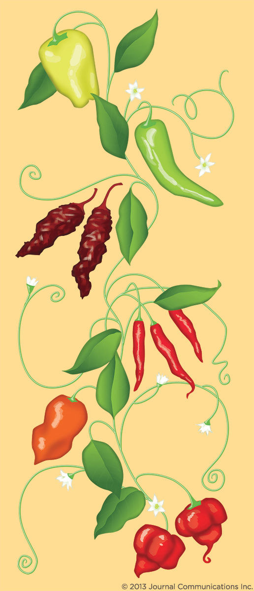 Hot peppers: New Mexican pepper, Chipotle pepper, Cayenne pepper, Habanero pepper, and Scorpion pepper