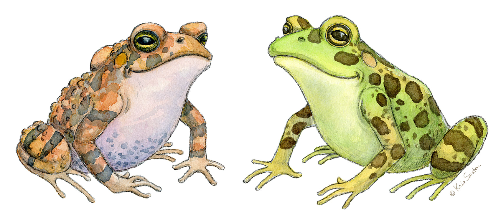 a toad and a frog